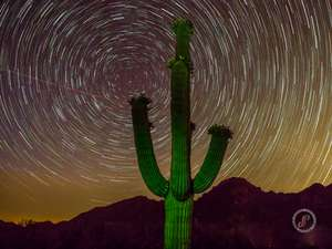 Star trails over Saguaro cactus